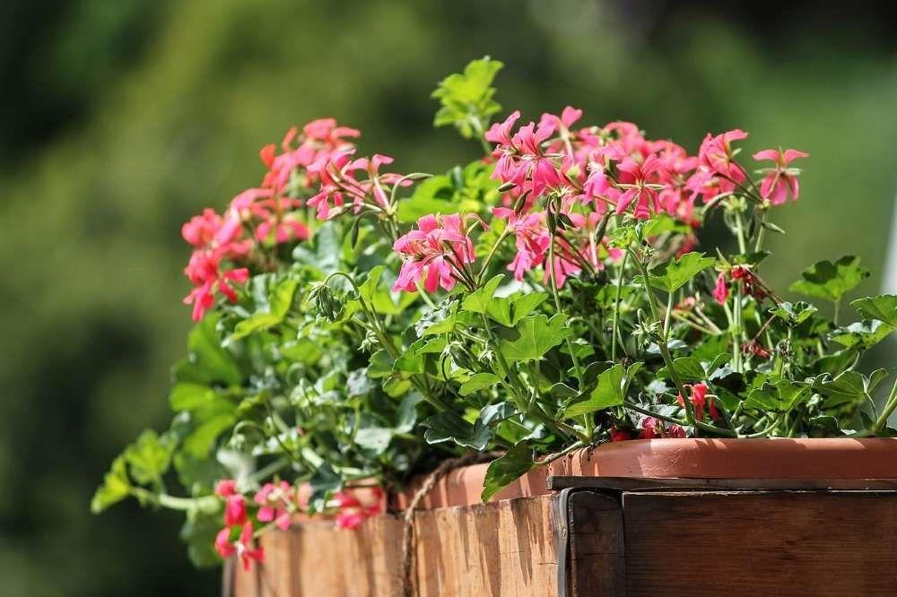 choisir plantes pour le balcon