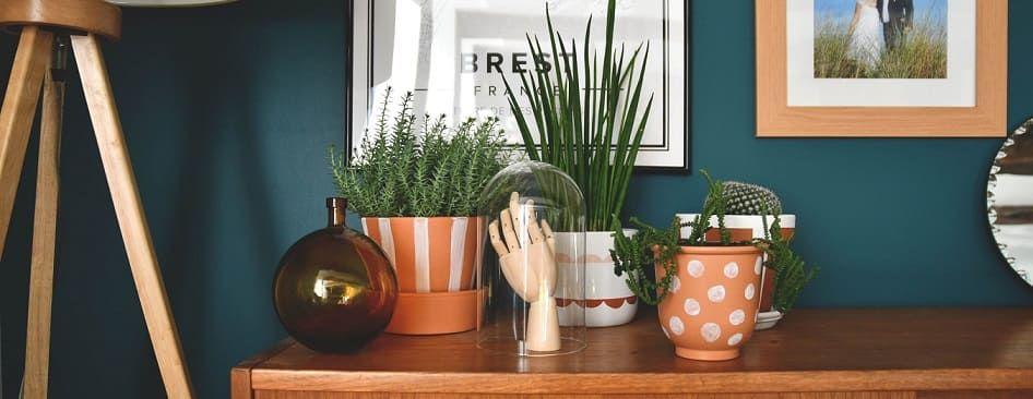 plantes d'intérieur faciles