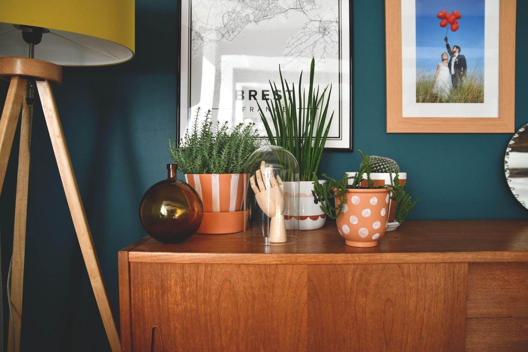 Comment Arroser Mes Plantes Pendant Les Vacances 10 plantes d'intérieur facile à cultiver
