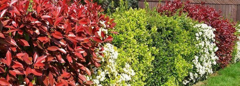 plantes haie