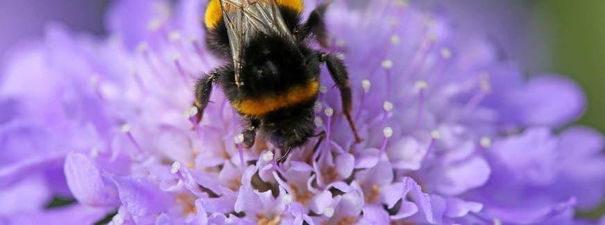 plantes pour abeilles