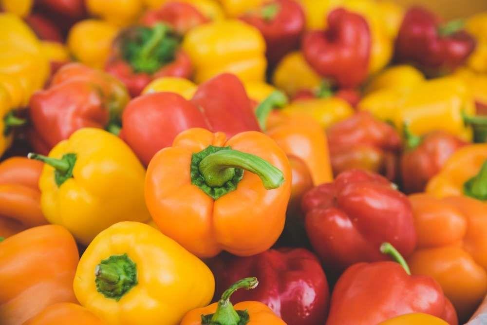 culture et récolte du poivron