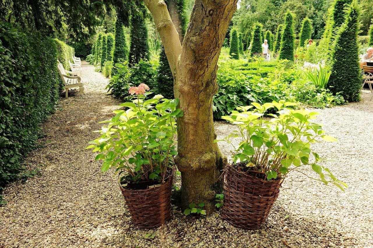 A Quelle Periode Tailler Les Lauriers quand et comment tailler des arbustes ?