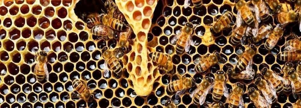 ruche d'abeille miel