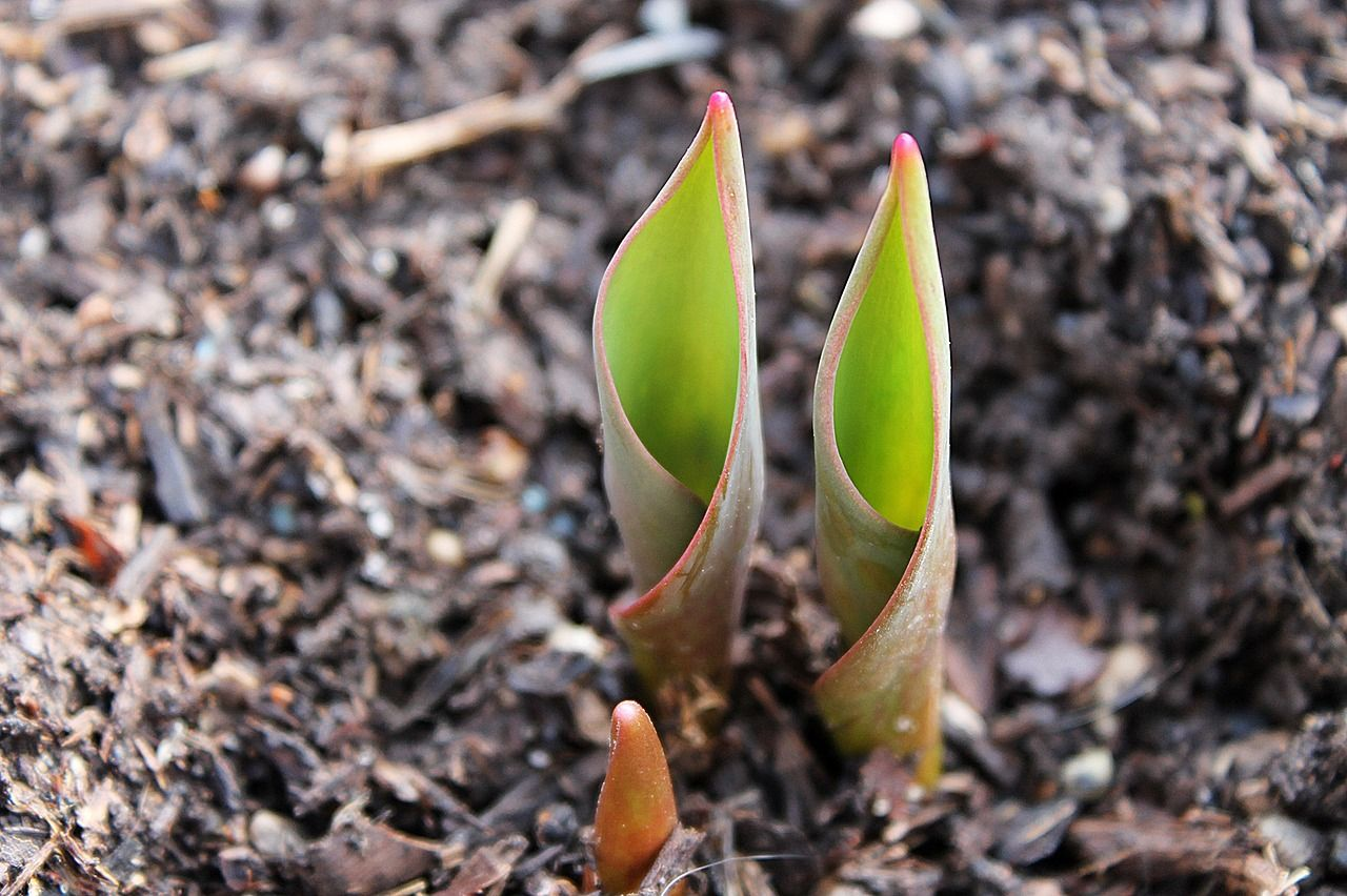 semis de fleurs