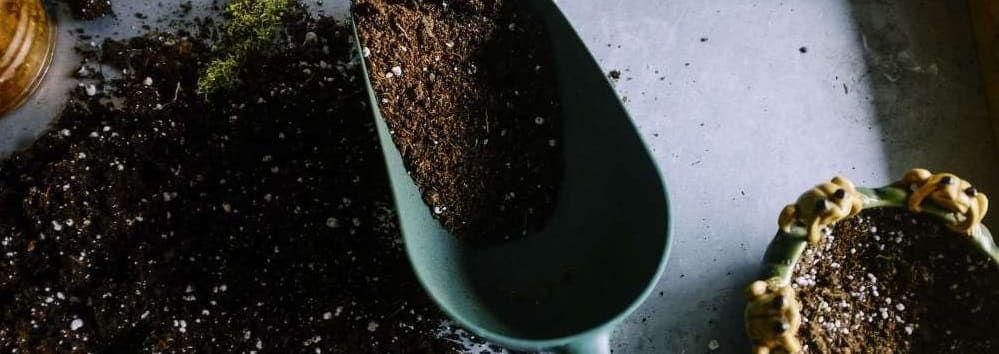 terreau plantes d'intérieur