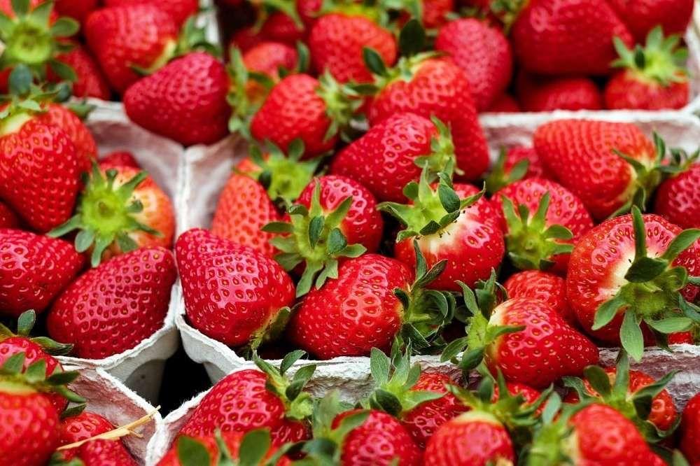 variétés fraises