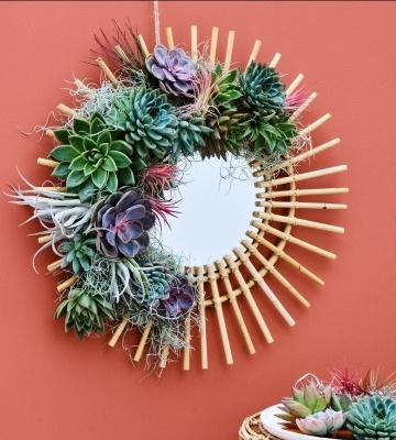 DIY : miroir végétal en succulentes