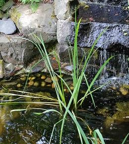 Entretien bassin jardin