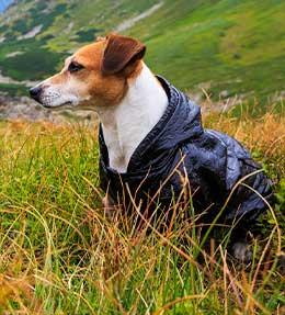 Un manteau adapté à mon animal