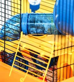 Choisir une cage pour mon lapin