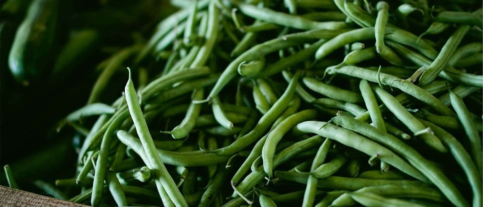 haricots verts potager