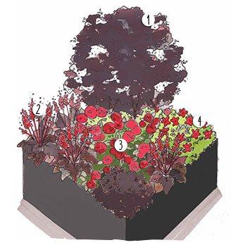 Aménagement jardin pourpres