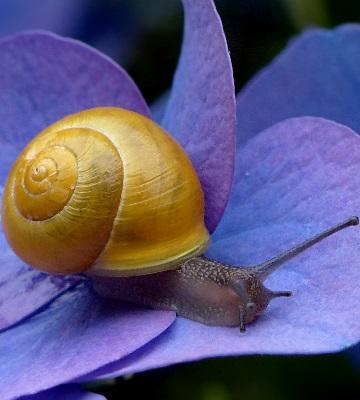 produits contre limaces escargots