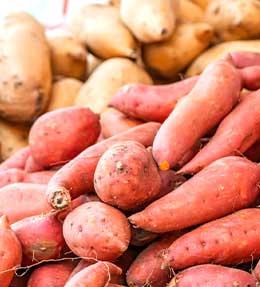 Patate douce : plantation, culture et récolte