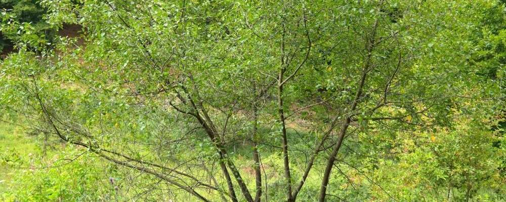 planter arbre et arbuste