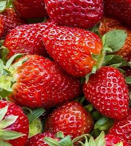planter fraisiers