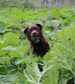 chien plantes