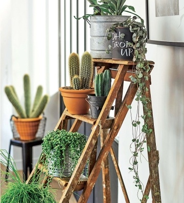 mur plantes vertes d'intérieur