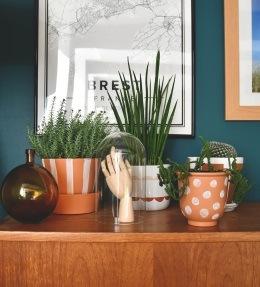 plantes faciles