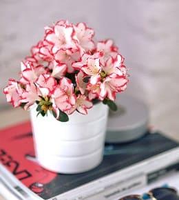 fleurs d'intérieur