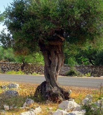 entretien plantes méditerranéennes