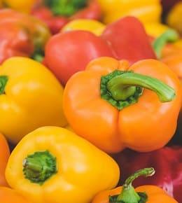 cultiver le poivron