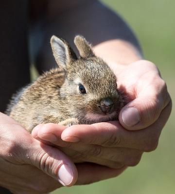 soins lapin nain et lapin bélier