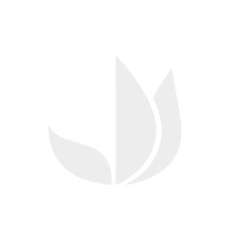 Livre d'activités: Rébus et messages secrets, 50 jeux