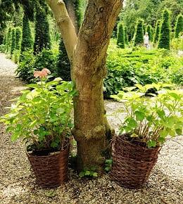 Quand et comment tailler des arbustes ?