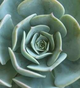 succulentes entretien