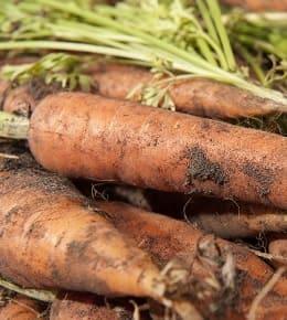 semer carottes