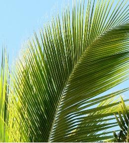 feuille palmier exterieur