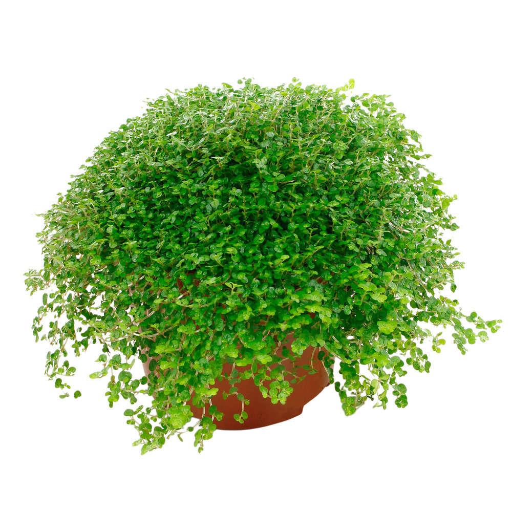 Mini plantes en marque-place 2