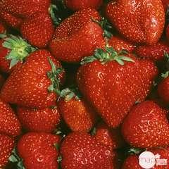 Plants de fraisiers 'Nova Gento' : barquette de 6 plants