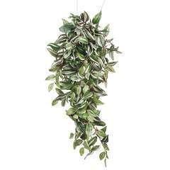 Chute de tradescantia, vert L. 80 x l. 30 x H. 15 cm