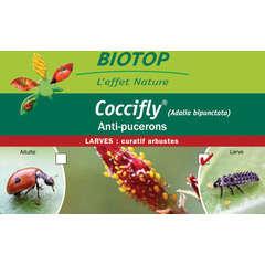 Coccifly® 80 larves anti-puceron arbuste