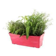 Plants d'aromatiques : en jardinière de 40 cm