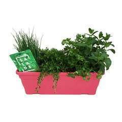 Plants d'aromatiques pour la salade : en jardinière de 40 cm