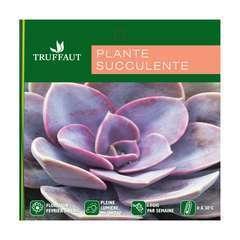 Plantes succulentes variées:pot D 18 cm