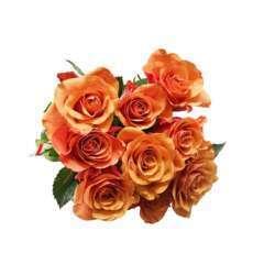 Botte de Roses 'Elégance' - 9 tiges : coloris variables