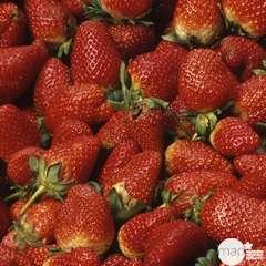 Plant de fraisier 'Nova Gento' : pot de 0,5 litre