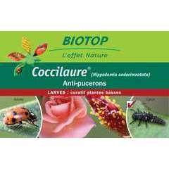 Coccilaure® 30 larves, anti-puceron plantes basses