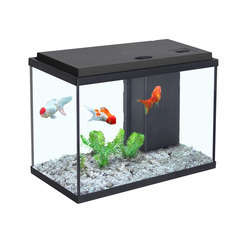 Aquarium Sarawak, noir - 15 litres