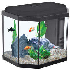Aquarium Sarawak, noir - 27 litres