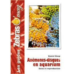 Guide aquariophilie : Les anémones disques