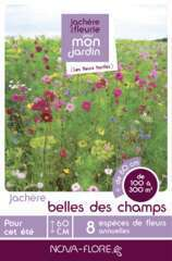 Prairies fleuries : jachères belle des champs - 100m²