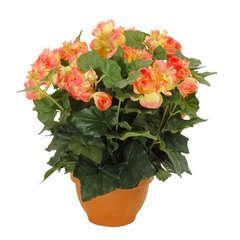 Begonia en pot Ø 17,5 cm, saumon Ø 35 x H. 37 cm