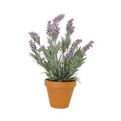 Lavande en pot basalte Ø 11,5 cm, violet Ø 20 x H. 33 cm