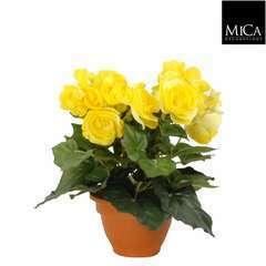 Begonia en pot Ø 11,5 cm, jaune Ø 20 x H. 25 cm